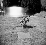 Flower Cemetery Ghost