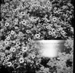 Flower Garden Ghost