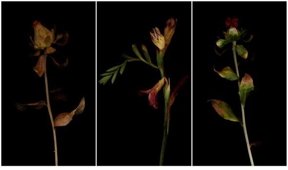 FlowersTriptich